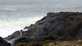 Onde che si schiantano in Lava Headlands Depoe Bay Oregon video d archivio