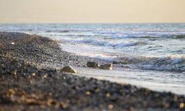 Onde che spruzzano ad una spiaggia Fotografia Stock