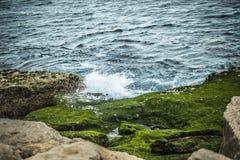 Onde che spruzzano sulle rocce e sulle alghe verdi fotografie stock