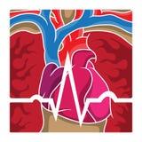Onde d'électrocardiogramme au-dessus de coeur et de poumons Photographie stock libre de droits