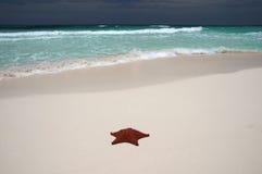 Onde d'étoiles de mer et d'océan photographie stock