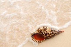 Onde de Seashell et d'océan Photo libre de droits