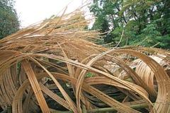 Onde del bambù Immagini Stock