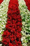 Onde del fiore Immagini Stock