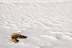 Onde della neve Fotografia Stock