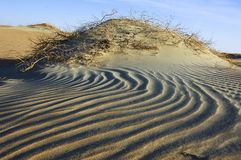 Onde della sabbia e delle piante nel deserto del ` Al Khali dello sfregamento Immagini Stock Libere da Diritti