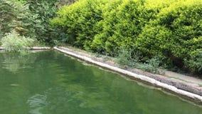 Onde di acqua in stagno con il suono del vento stock footage