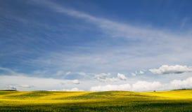 Onde di colore giallo Immagini Stock