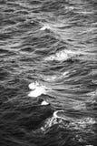Onde di oceano in bianco e nero immagini stock