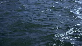 Onde di salto del mare del forte vento video d archivio