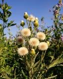 Onde espinhos e flores fotografia de stock royalty free