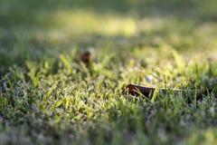 Onde a grama é verde Foto de Stock