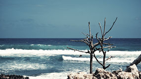 Onde in oceano Immagine Stock