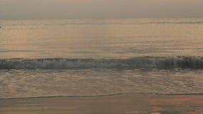 Onde sulla spiaggia archivi video