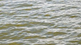 Onde sulla superficie dell'acqua video d archivio