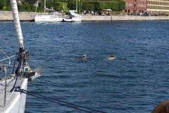 Onde termiche di WEATHER_Summer del ` della DANIMARCA in Danimarca immagine stock