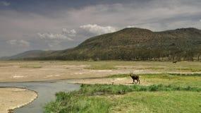 Onde a terra encontra o céu em Naivasha fotos de stock royalty free