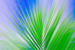 Ondeggiamento della palma Fotografie Stock