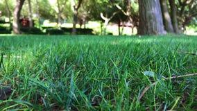 Ondeggiamento delle foglie dell'erba verde il giorno ventoso archivi video