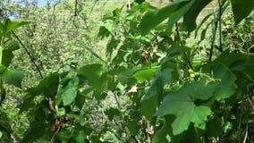 Ondeggiamento delle foglie nel vento archivi video