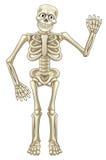 Ondeggiamento di scheletro di Halloween del fumetto Fotografia Stock Libera da Diritti
