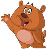 Ondeggiamento felice dell'orso Fotografia Stock