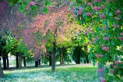 Onder bomen Stock Fotografie