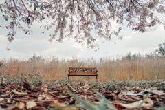 Onder boom Royalty-vrije Stock Foto