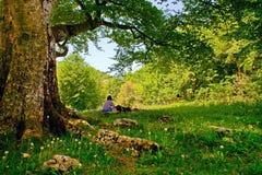 Onder boom in het bos stock afbeelding