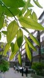 Onder de banyan boom Stock Afbeelding