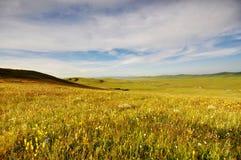 Onder de blauwe hemel en de witte wolken van gras Wildf Stock Foto