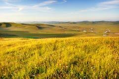 Onder de blauwe hemel en de witte wolken van gras Wildf Stock Afbeelding