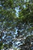 Onder de boom Stock Afbeelding
