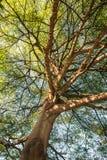 Onder de boom Royalty-vrije Stock Afbeeldingen