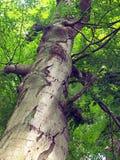 Onder de boom die omhoog eruit ziet Stock Foto