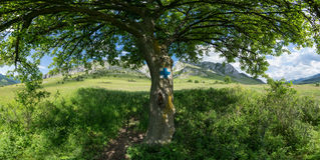 Onder de boomschaduw Stock Afbeelding