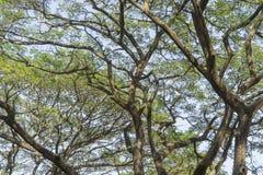 Onder de grote boom en met tak overdrijf royalty-vrije stock afbeeldingen