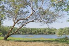 Onder de grote boom en met tak overdrijf stock afbeeldingen
