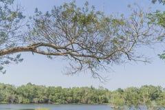 Onder de grote boom en met tak overdrijf stock fotografie