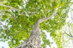 Onder de grote boom en met tak overdrijf royalty-vrije stock foto