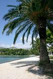 Onder de palm royalty-vrije stock afbeelding