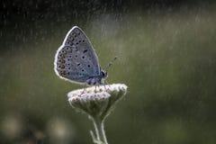 Onder de regen Stock Afbeelding