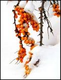 Onder de witte sluier Januari Royalty-vrije Stock Foto