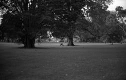 Onder een boom stock foto