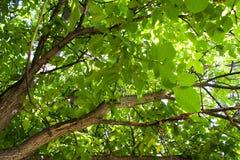 Onder een boom Royalty-vrije Stock Foto