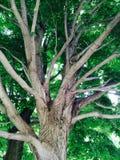 Onder een boom Royalty-vrije Stock Foto's