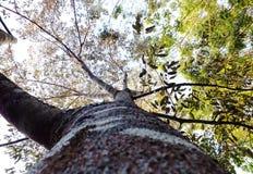Onder een boom Royalty-vrije Stock Afbeeldingen