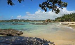 Onder een boom op Matapouri-strand Royalty-vrije Stock Afbeeldingen