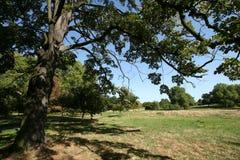 Onder een boom in Park Hyde Stock Foto's