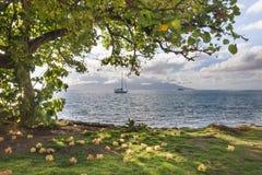Onder een Hibiscusboom in Tahiti stock fotografie